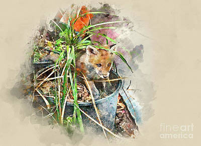 Photograph - Fox In The Grass by Jack Torcello