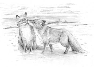 James Parker Drawing - Fox by James Parker