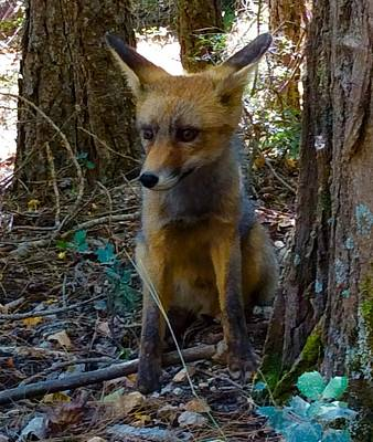 Photograph - Fox Joy  by Colette V Hera Guggenheim