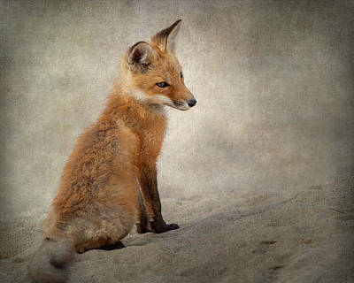 Photograph - Fox Kit 2018 by Bill Wakeley