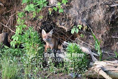 Photograph - Fox Kit 2764 by Captain Debbie Ritter