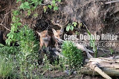 Photograph - Fox Kit 2815 by Captain Debbie Ritter