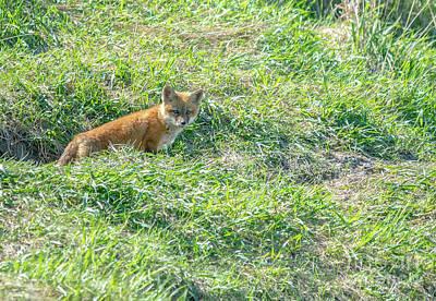 Photograph - Fox Kit by Cheryl Baxter