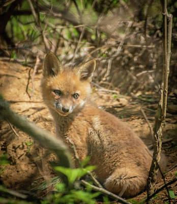 Photograph - Fox Kit Img 2 by Bruce Pritchett