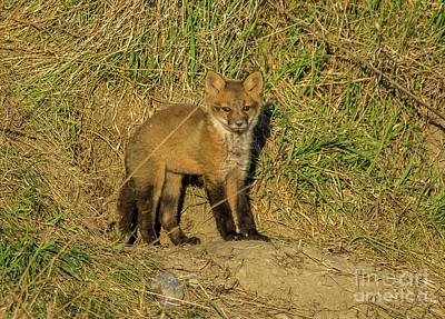Photograph - Fox Kit Standing by Cheryl Baxter