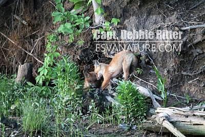 Photograph - Fox Kits 2967 by Captain Debbie Ritter