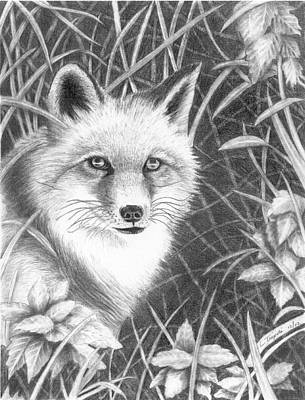 Drawing - Fox by Lawrence Tripoli