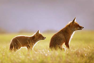 Sorrel Photograph - Fox Love Series - Mom...? by Roeselien Raimond