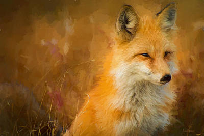 Photograph - Fox - Painted by Ericamaxine Price