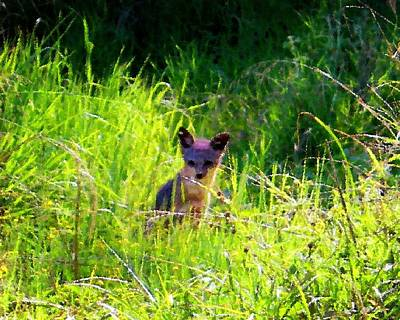 Photograph - Fox Pup by Timothy Bulone