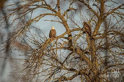 Photograph - Fox River Eagles - 10 by David Bearden