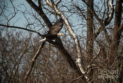 Photograph - Fox River Eagles - 20 by David Bearden