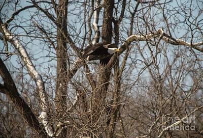 Photograph - Fox River Eagles - 21 by David Bearden