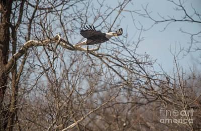 Photograph - Fox River Eagles - 22 by David Bearden