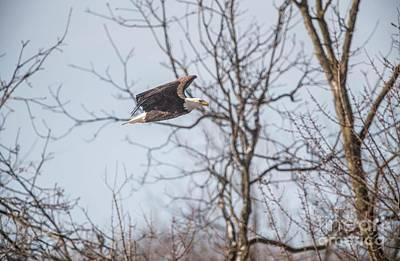 Photograph - Fox River Eagles - 23 by David Bearden