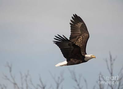 Photograph - Fox River Eagles - 24 by David Bearden