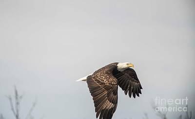 Photograph - Fox River Eagles - 25 by David Bearden
