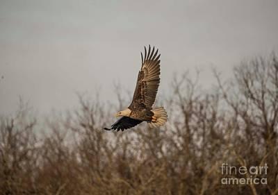 Photograph - Fox River Eagles - 6 by David Bearden