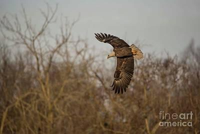 Photograph - Fox River Eagles - 7 by David Bearden