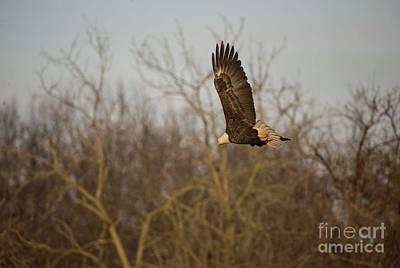 Photograph - Fox River Eagles - 8 by David Bearden