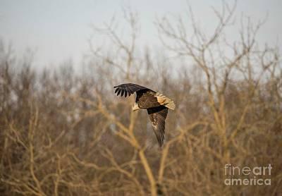 Photograph - Fox River Eagles - 9 by David Bearden