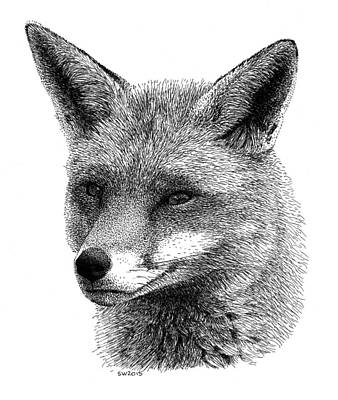 Drawing - Fox by Scott Woyak