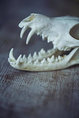 Skull Photograph - Fox Skull by Art of Invi