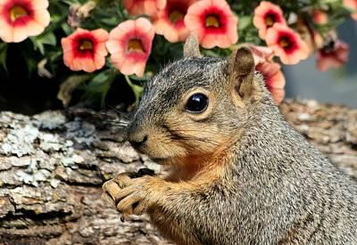 Photograph - Fox Squirrel Portrait by Sheila Brown
