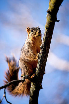 Photograph - Fox Squirrel's Last Look by Onyonet  Photo Studios