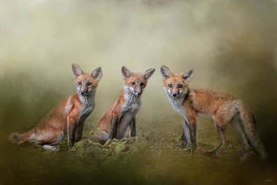 Photograph - Fox Trio by Jai Johnson