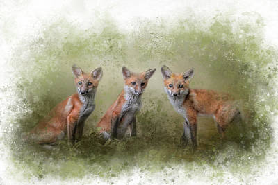 Photograph - Fox Trio Watercolor Border by Jai Johnson