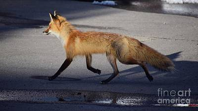 Photograph - Fox Trot by Johanne Peale