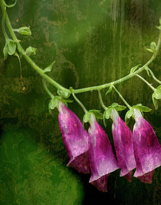 Foxglove Flowers Mixed Media - Foxglove by Bonnie Bruno