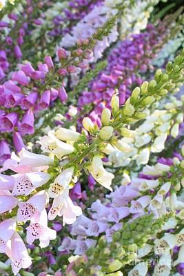 Foxglove Flowers Photograph - Foxglove Card by Carol Groenen
