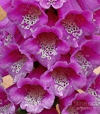 Diane Berry Digital Art - Foxglove by Diane E Berry