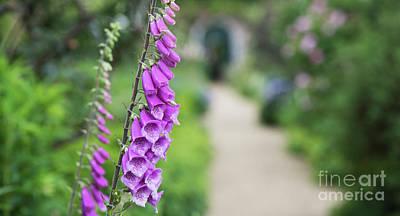 Photograph - Foxglove In An English Garden by Tim Gainey