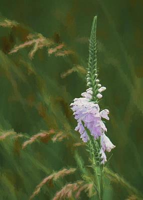 Foxglove In Bloom Art Print