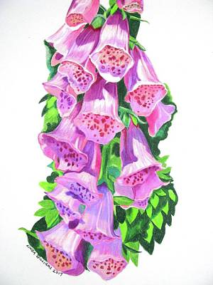 Foxglove Flowers Drawing - Foxglove In Strong Sunlight by Linda Williams