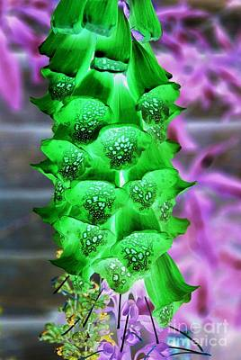 Photograph - Foxglove Inverted by David Fowler