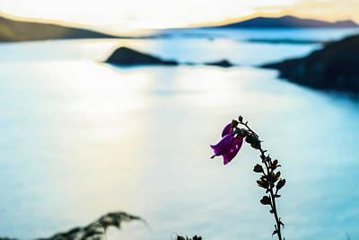 Photograph - Foxglove by Noel O Neill