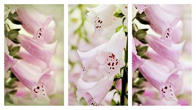 Photograph - Foxglove Triptych by Jessica Jenney