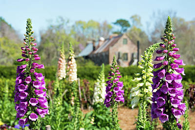 Photograph - Foxgloves by Ed Waldrop