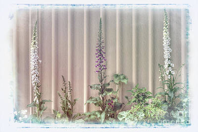 Photograph - Foxgloves by Elaine Teague