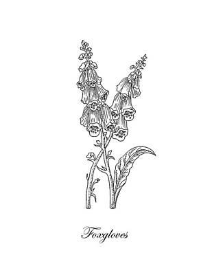 Floral Drawings - Foxgloves Flower Botanical Drawing  by Irina Sztukowski