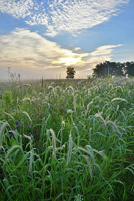 Photograph - Foxtail Grasses In Glacial Park by Ray Mathis