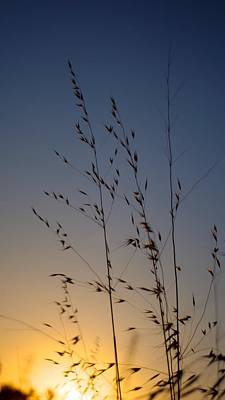 Photograph - Foxtail Sunset by Alex King
