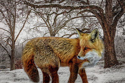 Photograph - Foxy Closeup In Hdr Detail by Debra and Dave Vanderlaan