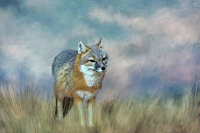 Photograph - Foxy by Judy Vincent