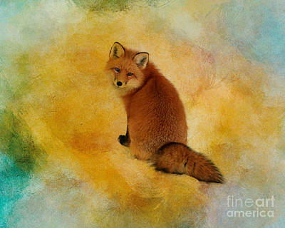 Photograph - Foxy Lady by Heather King