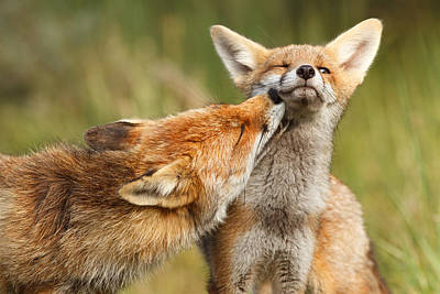 Fox Kit Photograph - Foxy Love Series - But Mo-om by Roeselien Raimond